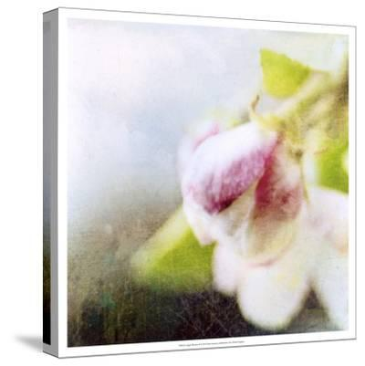 Apple Blossom II--Stretched Canvas Print
