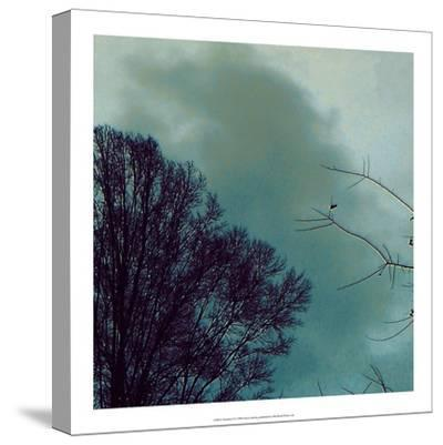 Nocturne II-Alicia Ludwig-Stretched Canvas Print