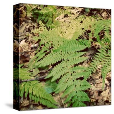 Shady Grove III-Alicia Ludwig-Stretched Canvas Print