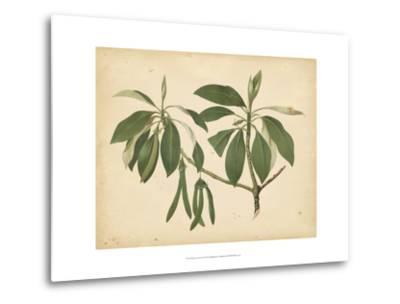 Nature's Greenery IX--Metal Print