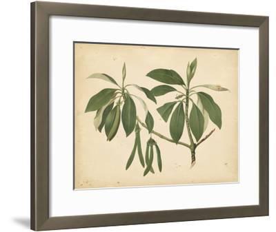 Nature's Greenery IX--Framed Art Print