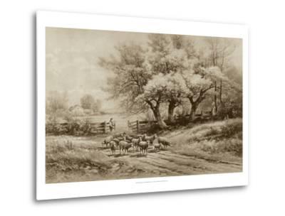 Herding Sheep-Carl Weber-Metal Print