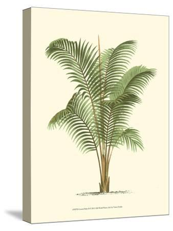 Coastal Palm II--Stretched Canvas Print