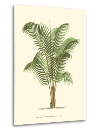 Coastal Palm II--Metal Print