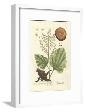 Non-Embellished Vintage Foliage III-Blackwell-Framed Art Print