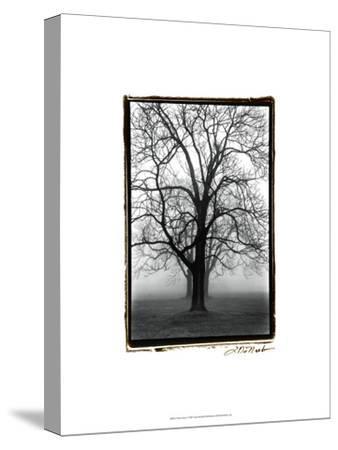 Three Graces-Laura Denardo-Stretched Canvas Print