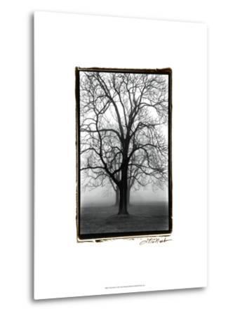 Three Graces-Laura Denardo-Metal Print