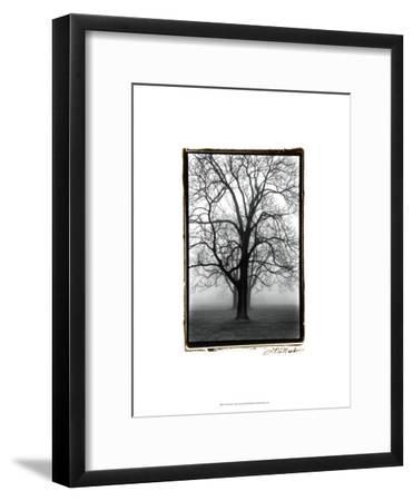 Three Graces-Laura Denardo-Framed Art Print
