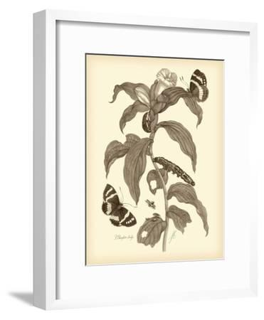 Nature Study in Sepia I-Maria Sibylla Merian-Framed Premium Giclee Print