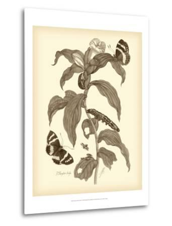 Nature Study in Sepia I-Maria Sibylla Merian-Metal Print
