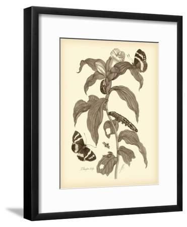 Nature Study in Sepia I-Maria Sibylla Merian-Framed Art Print
