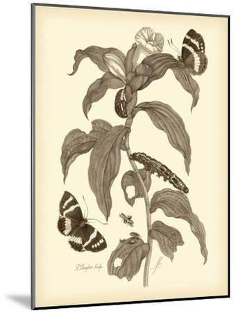 Nature Study in Sepia I-Maria Sibylla Merian-Mounted Art Print