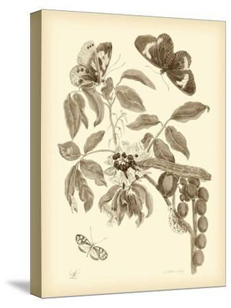 Nature Study in Sepia II-Maria Sibylla Merian-Stretched Canvas Print