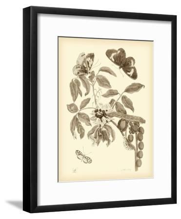 Nature Study in Sepia II-Maria Sibylla Merian-Framed Premium Giclee Print