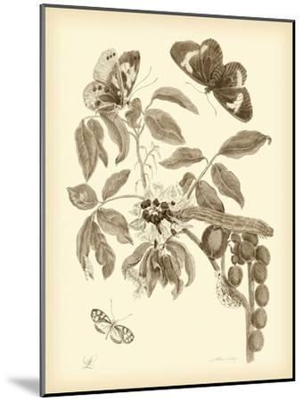 Nature Study in Sepia II-Maria Sibylla Merian-Mounted Premium Giclee Print