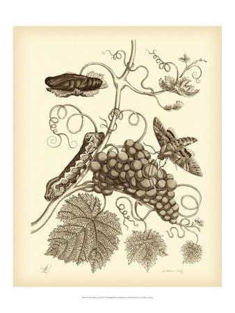 Nature Study in Sepia III-Maria Sibylla Merian-Framed Art Print