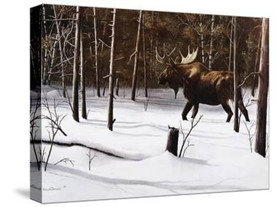 Winter Forage-Kevin Daniel-Stretched Canvas Print