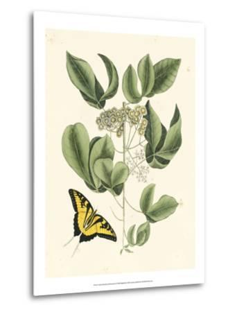 Butterfly and Botanical II-Mark Catesby-Metal Print
