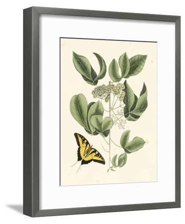 Butterfly and Botanical II-Mark Catesby-Framed Art Print