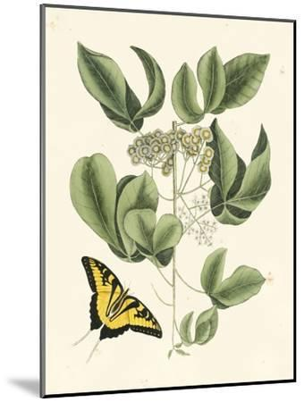 Butterfly and Botanical II-Mark Catesby-Mounted Art Print