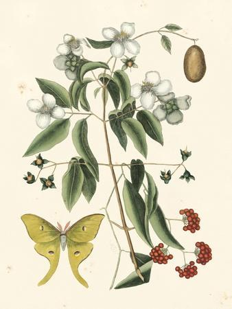 Butterfly and Botanical III-Mark Catesby-Framed Art Print