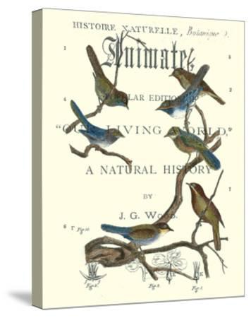 Non Embellish Vintage Ornithology II-Vision Studio-Stretched Canvas Print