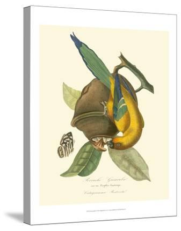 Nature Jardin IV-L. Curmer-Stretched Canvas Print