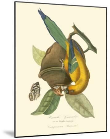 Nature Jardin IV-L. Curmer-Mounted Art Print
