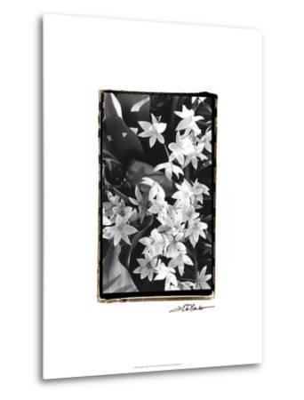 Springtime Garden VII-Laura Denardo-Metal Print