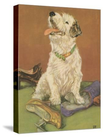 Terrier Trouble III--Stretched Canvas Print