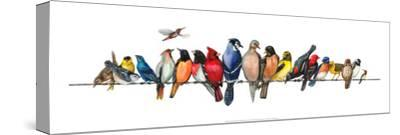 Large Bird Menagerie-Wendy Russell-Stretched Canvas Print
