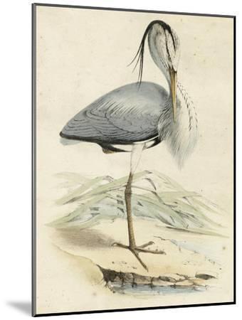 Antique Heron IV--Mounted Art Print