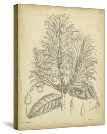 Vintage Curtis Botanical V-Samuel Curtis-Stretched Canvas Print