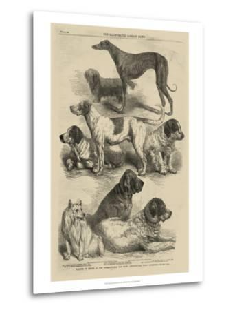 International Dog Show I--Metal Print