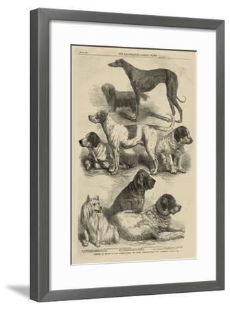 International Dog Show I--Framed Art Print