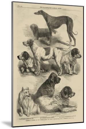 International Dog Show I--Mounted Art Print