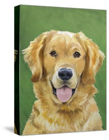Dog Portrait, Golden-Jill Sands-Stretched Canvas Print