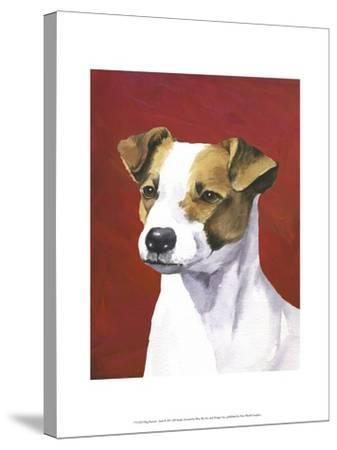 Dog Portrait, Jack-Jill Sands-Stretched Canvas Print