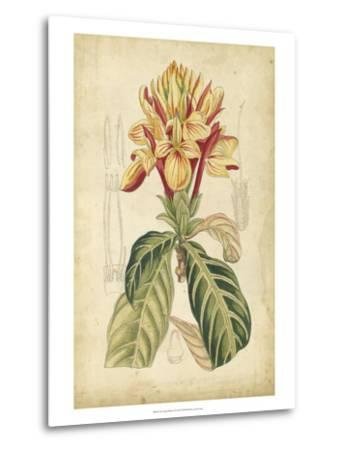 Curtis Tropical Blooms IV-Samuel Curtis-Metal Print