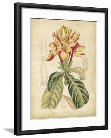 Curtis Tropical Blooms IV-Samuel Curtis-Framed Art Print