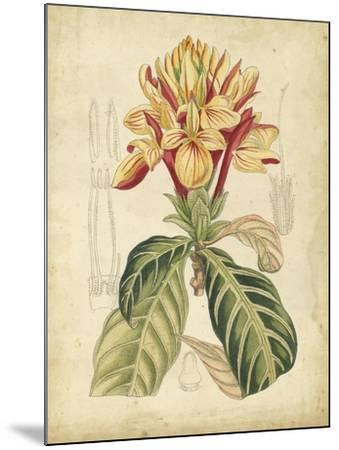 Curtis Tropical Blooms IV-Samuel Curtis-Mounted Art Print