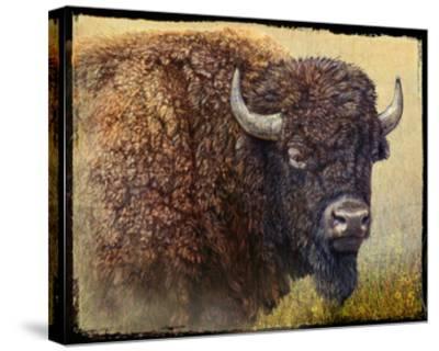 Bison Portrait I-Chris Vest-Stretched Canvas Print