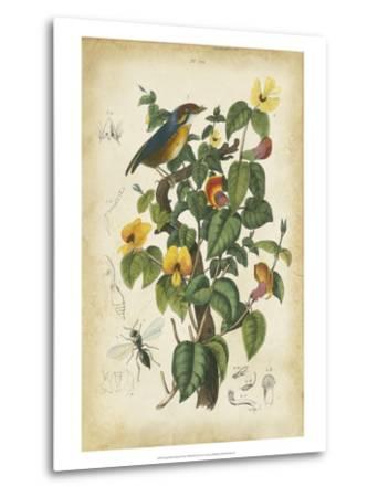 Antique Bird in Nature III--Metal Print