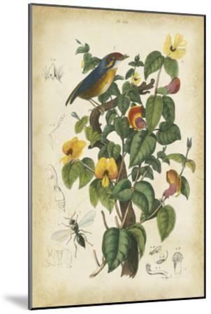 Antique Bird in Nature III--Mounted Art Print