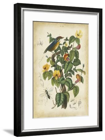 Antique Bird in Nature III--Framed Art Print