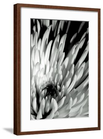 Dramatic Mum I-Renee W^ Stramel-Framed Art Print