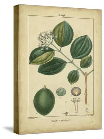 Vintage Turpin Botanical III-Turpin-Stretched Canvas Print