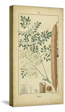 Vintage Turpin Botanical V-Turpin-Stretched Canvas Print
