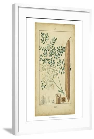 Vintage Turpin Botanical V-Turpin-Framed Art Print