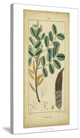 Vintage Turpin Botanical VII-Turpin-Stretched Canvas Print
